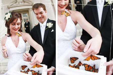 butterflies at wedding